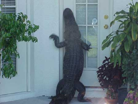 Alligator wants in pic from Animals, Real-life photos