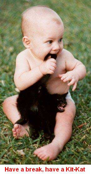 Baby biting a kitty pic from Animals, Kids