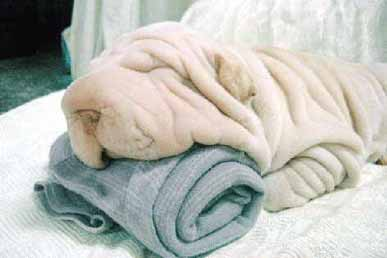 Where does the blanket stop and the dog start? pic from Animals