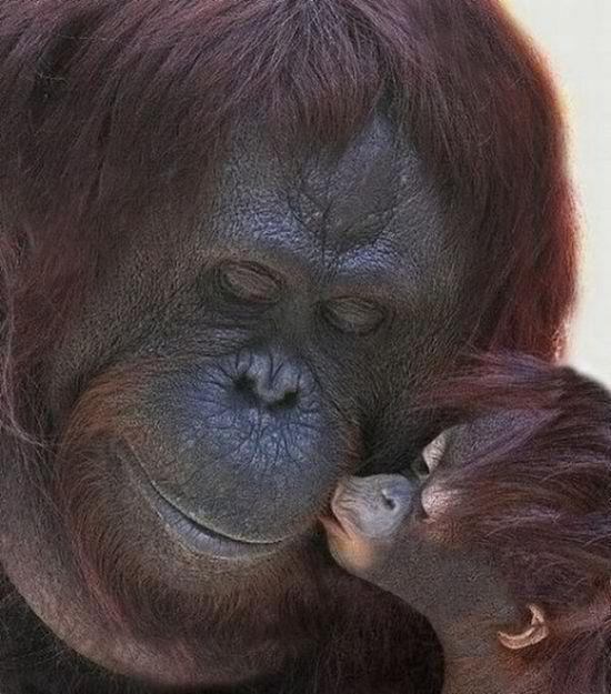 Kiss me, my child pic from Animals, Love